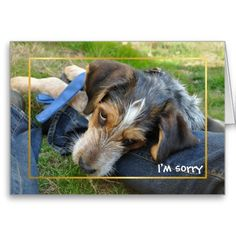 Sorry hound dog cards. Feel the pathos! Who can resist those sad apologising eyes on an 'I'm sorry' card.