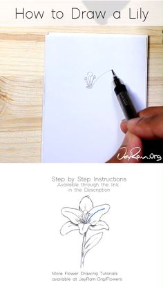 How to Draw a Lily : Step by Step for Beginners - Floral arrangements Lilly Flower Drawing, Lilies Drawing, Floral Drawing, Flower Drawing Tutorials, Flower Sketches, Flower Drawings, Flower Drawing Tutorial Step By Step, How To Draw Flowers Step By Step, Flower Step By Step
