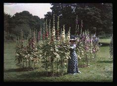 Autochrome anonyme, femme et fleurs, Circa 1910 - Antiq Photo - Photographies - [( 04. Autochromes supprimer_numero)] - Achat, vente et estimation gratuite d'appareils photos anciens, de photographies de collection et de daguerréotypes.