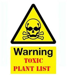 One to study and think about: Exhaustive list of common poisonous plants & flowers to be aware of in your garden if you have children or pets. Poisonous Plants, Edible Plants, Poison Garden, Pet Safe, Dream Garden, Garden Projects, Garden Ideas, The Great Outdoors, Good To Know
