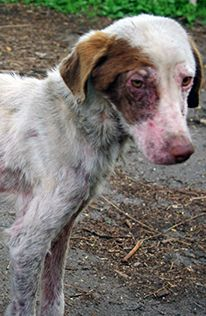 Please Donate now $ HELP FIRE DESTROYS UKRAINE ANIMAL SHELTER Through war, and now this fire, these poor dogs have suffered so much. We urgently need to make sure they are fed, their injuries are treated, and they are safe from bombs and bullets.  With your gift, you can help us feed and care for the dogs, repair the fence, and keep the shelter running. And your gift will help us rescue, care for, and protect animals everywhere we're helping them