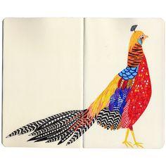 Oh how I love this pheasant-bird.