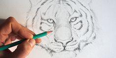 Quand on apprend à dessiner les animaux, et que l'on se lance dans le portrait animalier, on a souvent des problèmes pour structurer son dessin. Dans ce tutoriel de dessin en vidéo, je vous fais part d'une méthode très utile pour réussir à bien placer les éléments de la tête ...