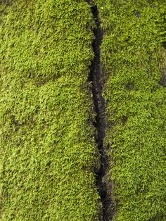 fissure in mossy tree