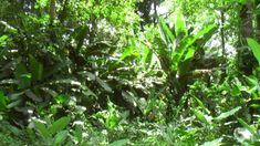 tropical rainforest ground - Google Search