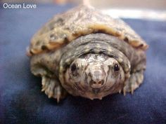 Awwwww I'm happy to see you too little guy! #turtle #turtles #cute #oceanlove