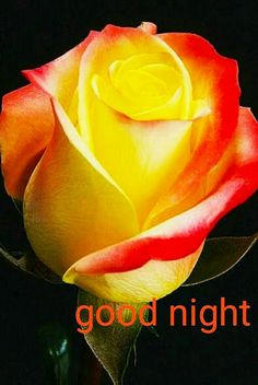 Good Night Images For Whatsapp New Good Night Images, Good Night To You, Beautiful Good Night Images, Good Night Prayer, Cute Good Night, Good Night Gif, Good Night Sweet Dreams, Good Morning Picture, Night Night