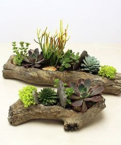 on to be you with this unique succulent garden in a faux log shaped vessel. Perfect for a dorm room or a teacher's desk!Dream on to be you with this unique succulent garden in a faux log shaped vessel. Perfect for a dorm room or a teacher's desk! Succulent Planter Diy, Succulent Landscaping, Succulent Gardening, Planting Succulents, Log Planter, Cactus Terrarium, Planter Ideas, Organic Gardening, Indoor Cactus Garden