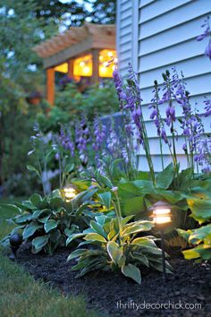 How to install landscaping lights in a hosta garden @thriftydecorchick