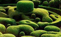 Hedge Masters / Knibb Design Blog
