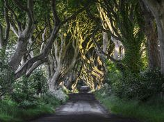 The Dark Hedges, Northern Ireland Filming locations for Game of Thrones Places To Travel, Places To See, Travel Destinations, Hedges, Game Of Thrones Locations, Tree Tunnel, Excursion, All Nature, Filming Locations