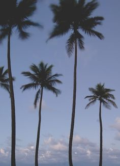 The periwinkle sky surrounds those lovely palm trees.