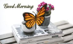 Good Morning Gif, Good Morning Messages, Good Afternoon, Good Morning Images, Sunday Morning, Happy Sunday, Evening Pictures, Morning Board, Butterfly