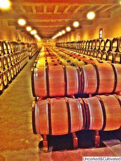 Chateau Figeac barrel room-St Emilion