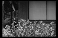 Late Spring, Yasujiro Ozu, 1949.