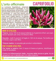 Caprifoglio In Natura, Dream Garden, Natural Health, Health And Wellness, Spices, Green, Nature, Plants, Food