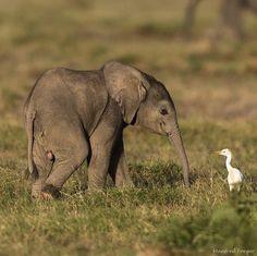 Elephants Photos, Save The Elephants, Elephant Photography, Animal Photography, Wildlife Photography, Travel Photography, Cute Funny Animals, Cute Baby Animals, Nature Animals