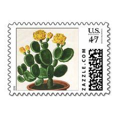 Vintage Cactus Flowers, Succulent Cacti Plants Postage Stamp