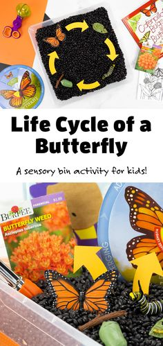 Invite kids to explore how a butterfly changes and grows throughout its lifetime with this hands-on Life Cycle of a Butterfly Activity! #lifecycleofabutterfly #activities #preschool #sensorybin #butterflyactivity via @firefliesandmudpies Arts And Crafts For Kids Toddlers, Creative Activities For Kids, Crafts For Kids To Make, Toddler Crafts, Kid Crafts, Sensory Bins, Sensory Play, Barn Quilt Designs, Child Teaching