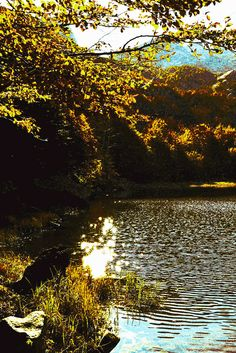 High Val Parma Forest  -  The Lagoni Reflections on Upper Lake