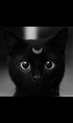 I love this cat, want it