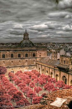 Cathedral Courtyard, Sevilla - Spain - Studied Spanish for 3 months in 2003