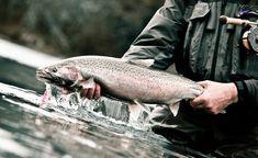 Blog | Fly Fishing |