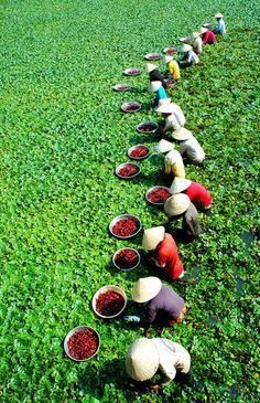 A beautiful shot of a day working in the fields in Vietnam. Vietnam Voyage, Vietnam Travel, Asia Travel, Travel Usa, We Are The World, People Around The World, Around The Worlds, Laos, Photo Zen