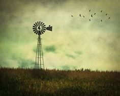 Country Photography - Home Decor - Warm - Nature - Birds - Windmill - Americana