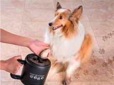 Clean dirt, mud and salt from your dog's paws before it gets tracked in your house or car.