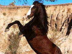 89 meilleures images du tableau cheveaux cheval chevaux et equitation. Black Bedroom Furniture Sets. Home Design Ideas