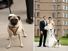 If I ever get married, the dog will be in the wedding no doubt!