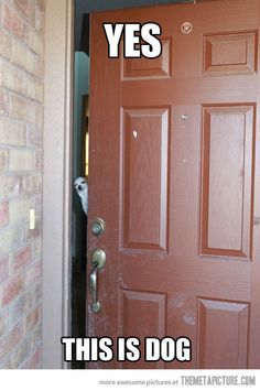 Dog answers the door…