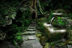 Puzzlewood Magical Forest- Forest of Dean, Gloucestshire, England, United Kingdom