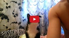 This Little Kitty Will Melt Your Heart - adorable!