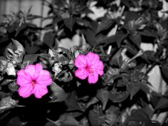 'Pink Flowers'  starting at $70.00  http://kaladecor.com/products-page/photography/pink-flowers/