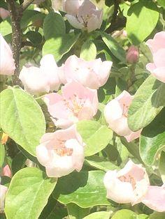 Primavera en Maeztu