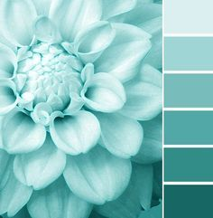 to inspire your Tiffany Blue Wedding! Check out our latest Tiffany blue wedding finds. Tiffany Blue, Azul Tiffany, Shades Of Turquoise, Turquoise Color, Aqua Blue, Light Turquoise, Pastel Blue, Turquoise Flowers, Color Blue