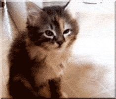 I Know That Feel, Cat (click through for the awesome gif).