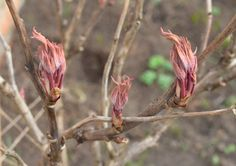 Spring cheer in the garden: buds, leaves and signs of life emerging everywhere you look.