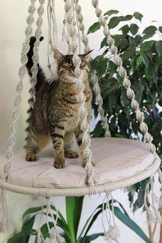 Items similar to Cat bed Hammock for cat Macrame cat hammock Cat swingLinen rope cat hammock Pendant bed for cat Toys for cats Cat pendant bed on Etsy Cat Room, Macrame Projects, Cat Furniture, Diy Stuffed Animals, Pet Beds, Crazy Cats, Cool Cats, Fur Babies, Pet Supplies