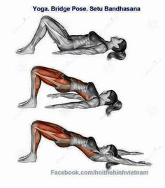 legs/hips wall sit ant  post thigh muscles gluteus