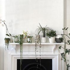 plants on a mantel