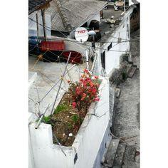 85kaleidoscope / #여행 #목포 #유달산 #옥상 #mokpo #rooftop #onajourney / 전라남 목포 / #골목 #식물 #살림 #지붕 / 2013 06 10 /