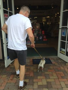 Only with continually education can the public and establishments help distinguish between real and fake service dogs.    http://piapiathepug.blogspot.com/2017/05/education-education-education.html