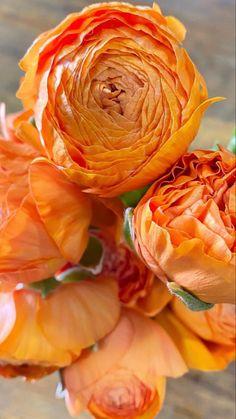 Rose Like Flowers, Flowers For Sale, Burgundy Flowers, Exotic Flowers, Amazing Flowers, Beautiful Flowers, Ranunculus Wedding Bouquet, Ranunculus Flowers, Wedding Flowers