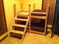 Image result for dog bunk bed