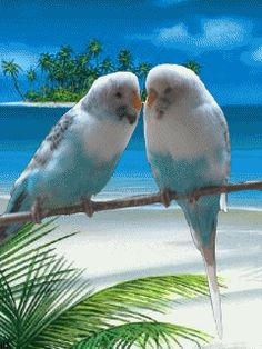 Love Birds ♥...:) Momma, remember Pretty Boy and Pretty Bird?? And how I always let them out of their cage every time you got on the phone?? Ahahaha! Great memory!
