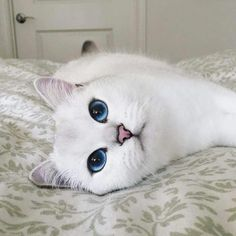 I love blue eyed cats and people