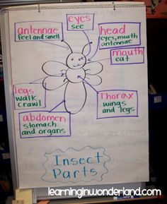 Insect anchor chart
